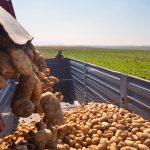 Vaststelling steun fritesaardappelen, sierteelt en voedingstuinbouw